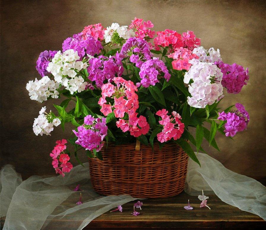 картинки флоксов в вазе
